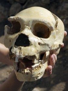 Il teschio Miguelon qui rinvenuto e risalente a 400000 anni fa (Philippe Desmazes-AFP-Getty Images)