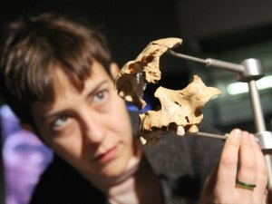 Pezzo di un teschio di 800000 anni fa scoperto ad Atapuerca (Patrick Kovarick-AFP-Getty Images)
