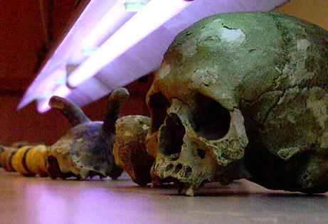 Ossa preistoriche trattate con luce ultravioletta (Joachim Burger-Science)