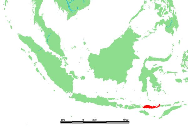 L'isola di flores (Michiel1972)