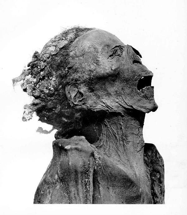 (Catalogue général des antiquités égyptiennes du Musée du Caire The Royal Mummies)
