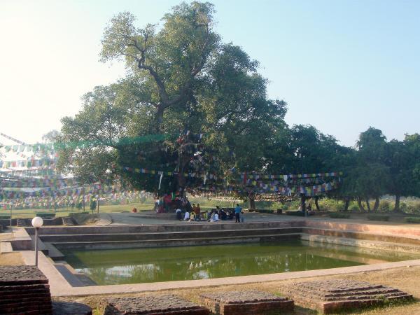 Albero della Bodhi e bagno di Lumbini (wikipedia)