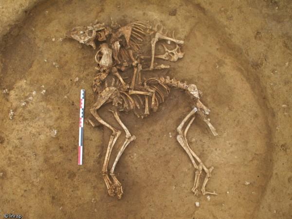 Risalenti tra il 450 e il 350 a.C. vi erano anche questi scheletri di un cane e di una pecora o capra (Clément Feliu, Inrap)