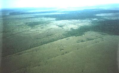 Strade preispaniche nell'Amazzonia boliviana (Università della Pennsylvania)
