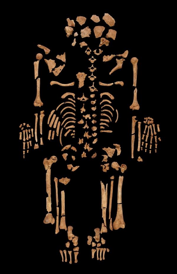 Lo scheletro del giovane (Trustees of the British Museum)