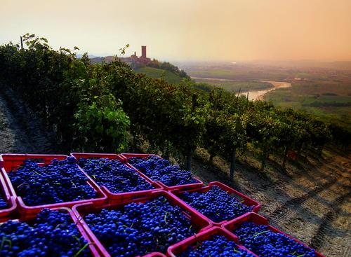 (Regione Piemonte)