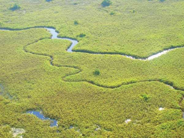 (Gertrude M. Matswiri, Channel - Okavango Delta)