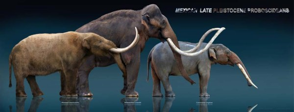 Queste sculture, prodotte dall'artista messicano Sergio de la Rpsa, mostrano tre 'antenati' degli elefanti (da sinistra): il mastodonte, il mammut e un gonfoteride (qui una specie senza le quattro zanne) (Sergio de la Rosa)