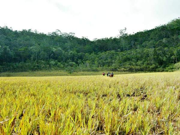 (Roy F. Ponce, Tinagong dagat)