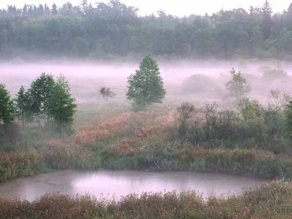 (Marek Kosinski, Narewka river valley)