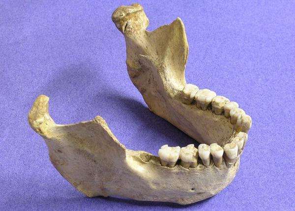 Una mandibola neandertaliana rinvenuta in Spagna e datata nel nuovo studio (Thomas Higham, Università di Oxford)