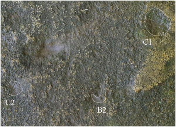C1 e C2 segnano il sorgere delle Luna quando è bassa, B1 e B2 quando è alta (Vodolazhsky D.I., 2014)
