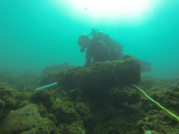 Un sommozzatore misura un cannone nella baia di Rockley (University of Connecticut)