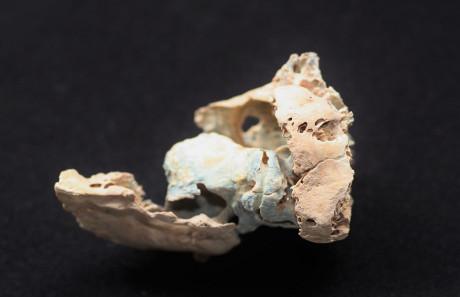 Uno dei frammenti ossei utilizzati nello studio (Cortesia Kendra Sirak/Emory University)