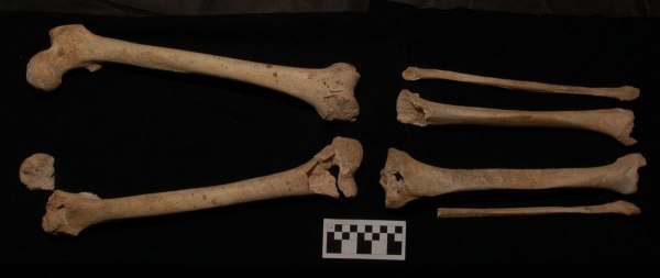 Ossa di gambe di donna nella Tomba I (Antonis Bartsiokas)