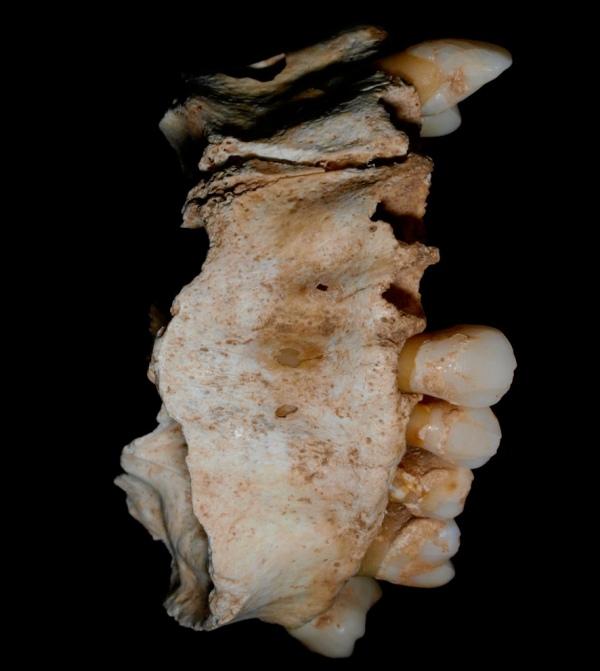 Mascella di donna nella Tomba I (Javier Trueba)