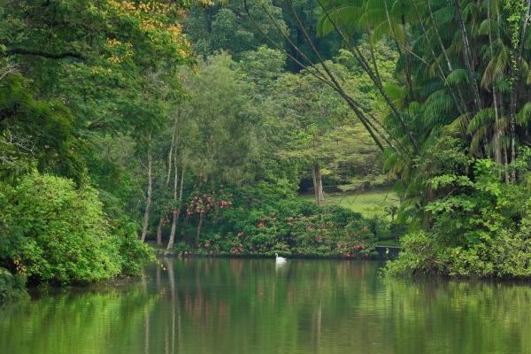 (Singapore Botanic Gardens)