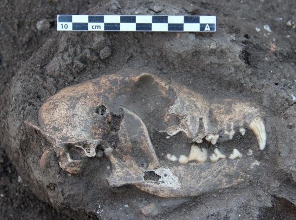Rinvenuto anche il cranio di un cane (Thomas Maurer)