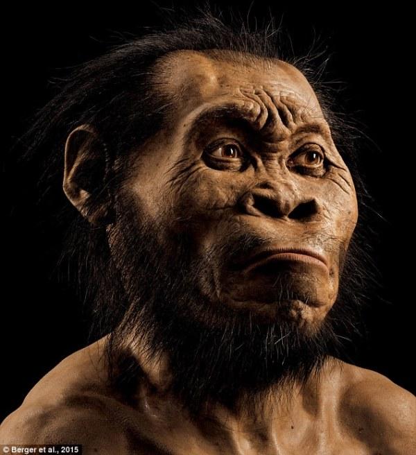 Ricostruzione dell'Homo naledi (Berger et al., 2015)