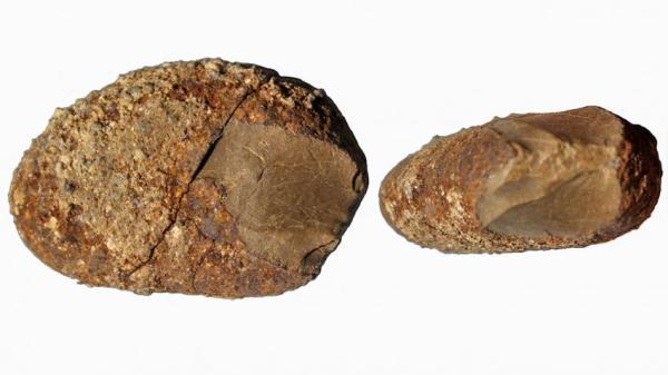 Questa roccia serpentina trovata in Cile, grande quanto una prugna, porta graffi fatti dall'uomo. Risalirebbe tra i 17.000 e i 19.000 anni fa (Tom Dillehay)