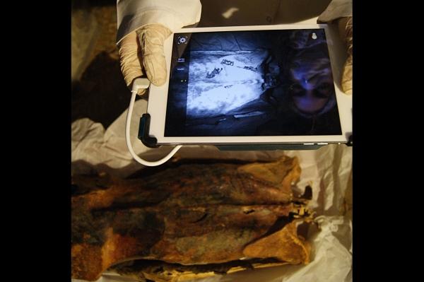 L'antropologa Ghada Darwish Al-Khafif usa immagini a infrarosso per esaminare la schiena (Anne Austin)