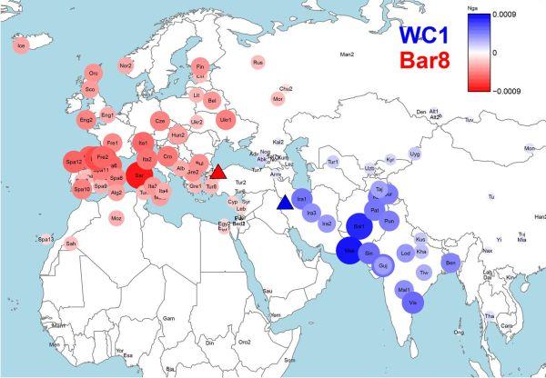 Vicinanza genetica tra i resti antichi e le popolazioni moderne. In rosso per i siti sul Mar Egeo; in blu per i siti tra Iran e Iraq (Science)