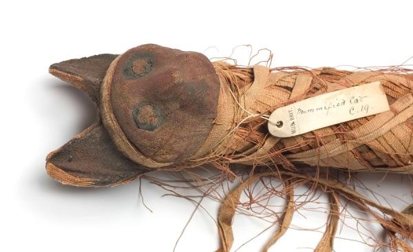 Un gatto mummificato dell'Antico Egitto