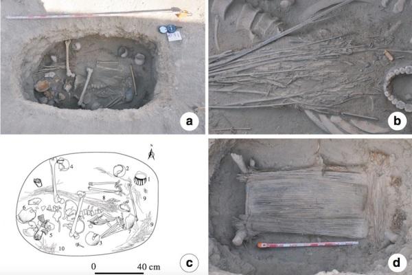 (A) La M231. (B) Primo piano della pianta di cannabis. (C) Disegno della sepoltura con: vasellame intatto (1 - 4); vasellame rotto (5 - 7); piante di cannabis (8); frammenti del cuscino (9); erbe selvatiche (10). (D) Il letto di legno e il cuscino di canne. (Hongen Jiang et al. Economic Botany. 2016)