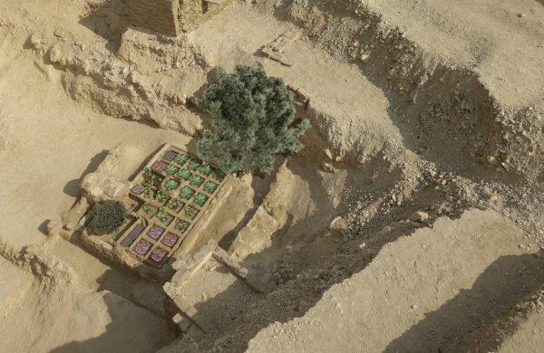 Piante In Casa : Scoperto il primo giardino funerario egizio fatto storico