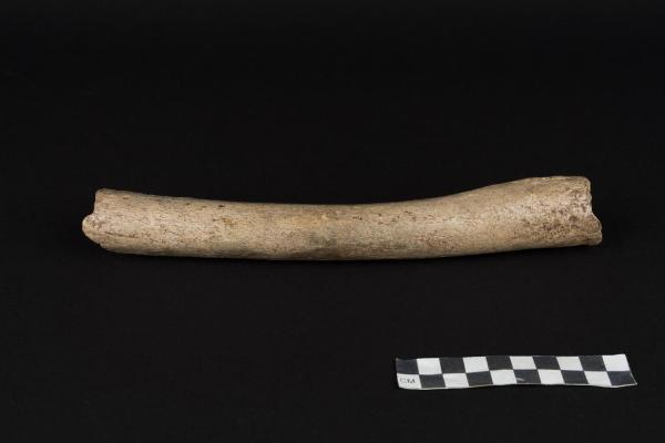 femore Neanderthal, HST, Hohlenstein-Stadel