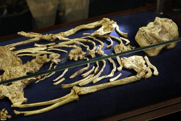 Australopithecus prometheus Little Foot