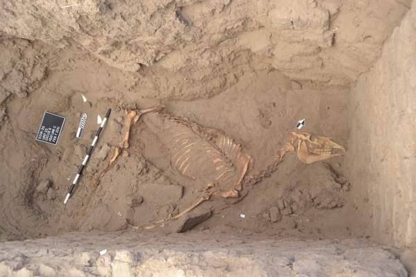 nubia sudan cavallo briglia ferro africa egizi