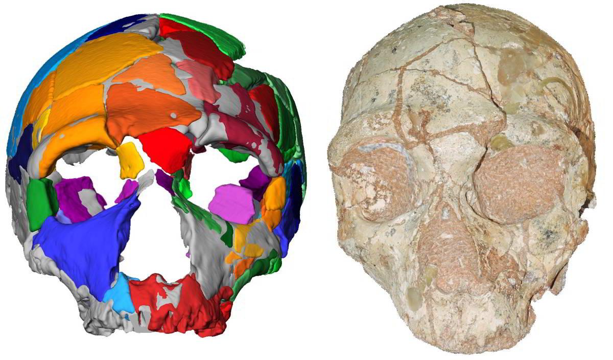 datazione del radiocarbonio dei fossili prelevati dalle grotte sulle isole gay Matchmaking servizio Sydney